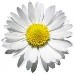 A Daisy is Just a Daisy–You Give It Meaning