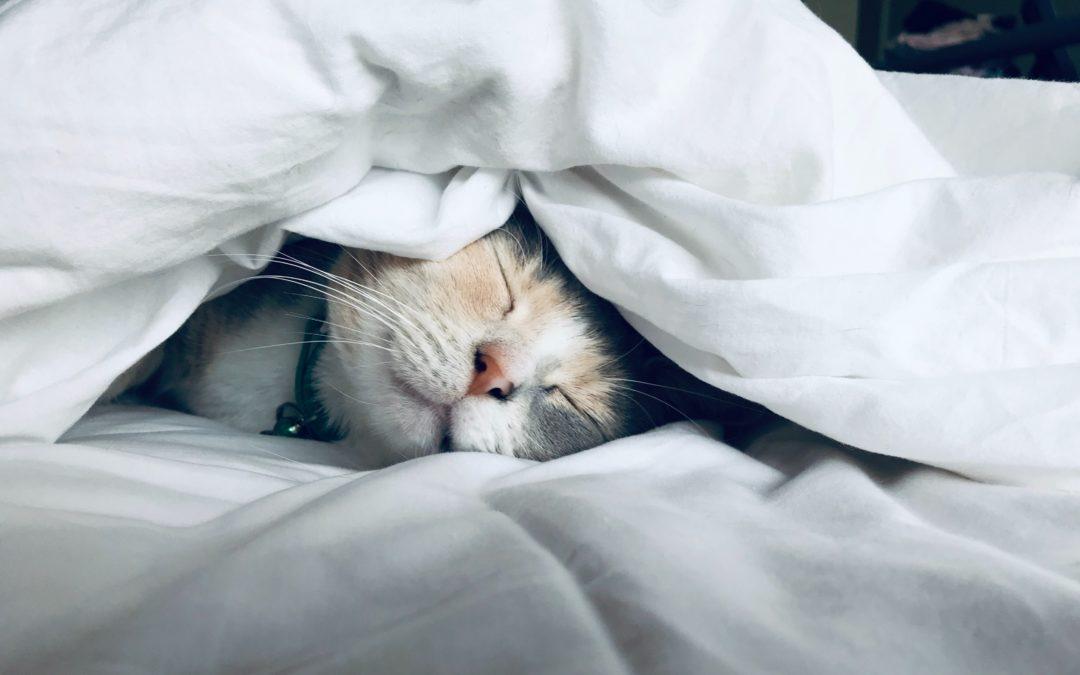 Sleep Right, Shine Bright